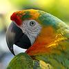 colorful_parrot