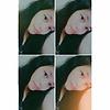 Wee_Ployya