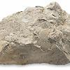 mypetrock