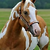 Countrygirl0328