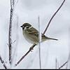 johnweaverbird