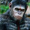MonkeyDude123